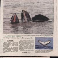 CF-20190712-Humpbacks aplenty feast off central co0001.PDF