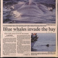 CF-20190712-Blue whales invade the bay0001.PDF