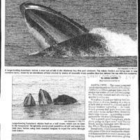 CF-20190712-A whale of a show0001.PDF