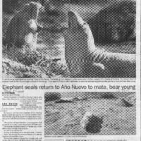 20170611-Elephant seals return to Ano Nuevo to mat0001.PDF