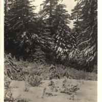 v2-181.jpg