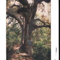 CF-20200213-Fungus is caise of oak ailment0001.PDF