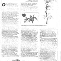 CF-20191204-Ucsc's endangered campuis lands r&d pr0001.PDF