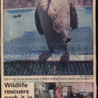 20170607-Wildlife rescuers pack it in0001.PDF