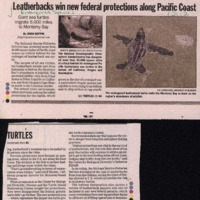 CF-20190809-Leatherbacks win new federal protectio0001.PDF