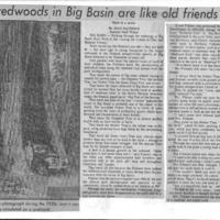 20170404-Virgin Redwoods in Big Basin0001.PDF