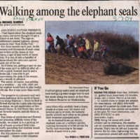 20170611-Walking among the elephant seals0001.PDF