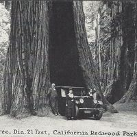 The Auto Tree (1).jpg