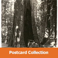 Historic Postcards of Santa Cruz County